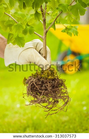 Hand with White Glove Holding Small Tree with roots on green and wheelbarrow background - stock photo