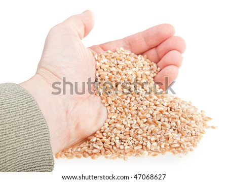 handful from wheat seeds on a white background - stock photo