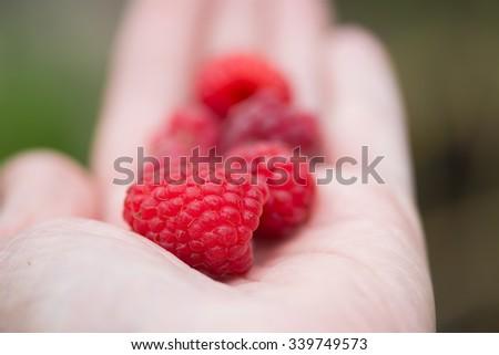 Handful of beautiful fresh raspberry on a hand - stock photo