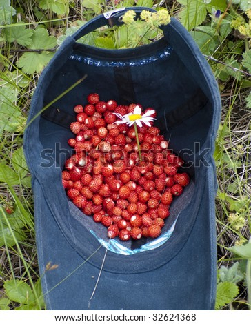 Handful of wild strawberry with a camomile in a baseball cap - stock photo