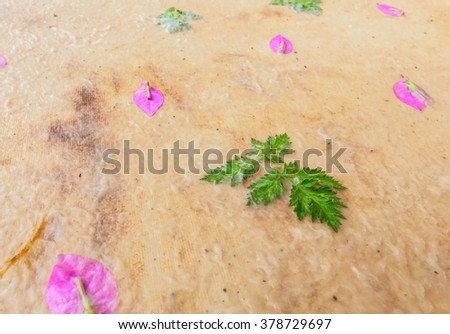 Handmade mulberry paper with fresh flower waiting to dry ( focus on fresh green leaf) - stock photo