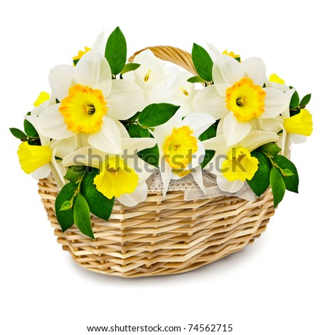 handmade wicker basket with narcissus over white - stock photo