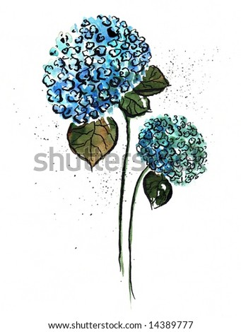 Handpainted watercolor illustration of two blue hydrangea flowers on white background. Art is created and painted by photographer - stock photo