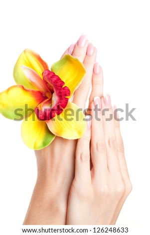 Hands and orchid, closeup, studio shot - stock photo