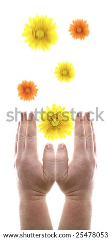 hands begging receiving blessing as flowers falling. two hands isolated on white - stock photo