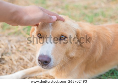 hands caress head of dog - stock photo