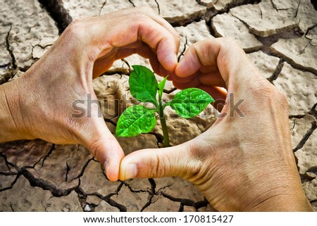 hands forming a heart shape around a tree growing on cracked ground /hands growing tree / save the world / environmental problems / growing tree / cut tree - stock photo