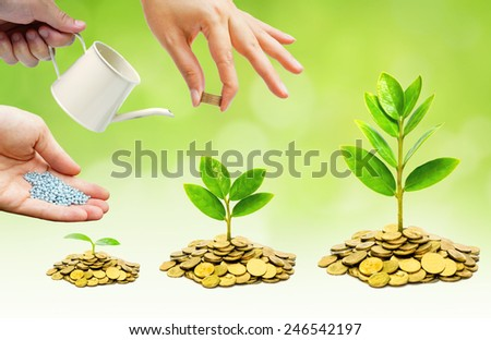 hands helping to grow trees on piles of golden coins / business with csr practice - stock photo
