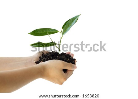 Hands holding a new plant - stock photo