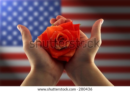 hands holding a red rose, blurred american flag in the background - stock photo