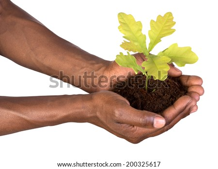 Hands holding a small plant - stock photo