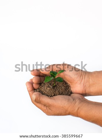 Hands holding a small plant. - stock photo