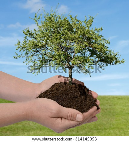 Hands holding a tree nature concept - stock photo