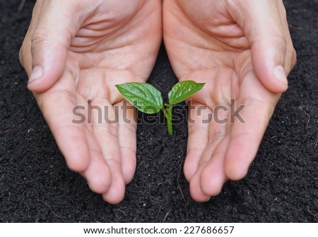 hands holding and caring a young green plant - stock photo