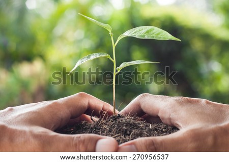 hands holding and caring a young plant - stock photo