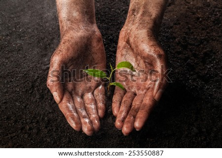 hands holding and protecting a young green plant in the rain - stock photo