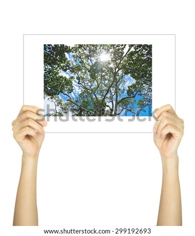Hands holding big tree picture isolated on white  - stock photo