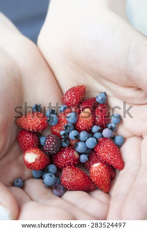 Hands holding freshly picked wild strawberries and blueberries - stock photo