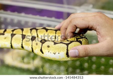 Hands Holding gold boa - stock photo