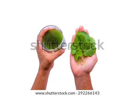Hands holding gotu kola leaves and a glass of gotu gola juice - stock photo