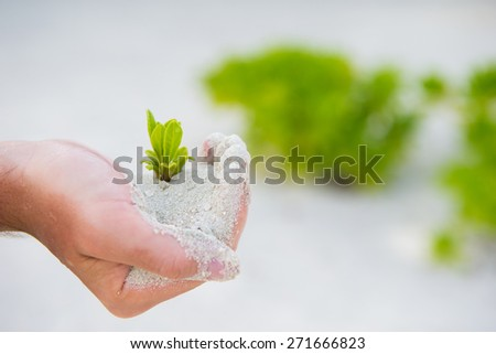 Hands holding green sapling background the white sand - stock photo