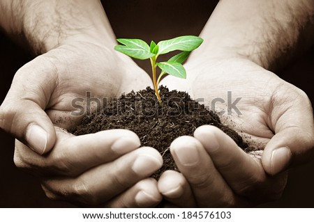Hands holding green sapling with soil - stock photo