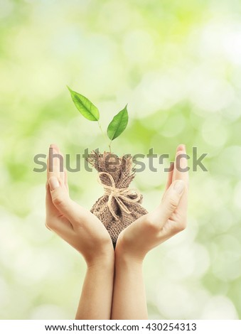 Hands holding green sprout on nature background. New life concept - stock photo
