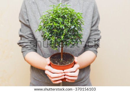 Hands holding green tree in pot - stock photo