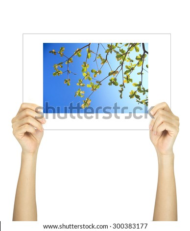 Hands holding leaf picture isolated on white  - stock photo
