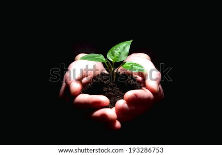 Hands holding plant in soil on black - stock photo