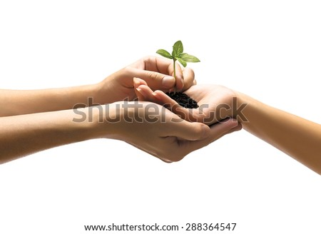 Hands holding plant on white background - stock photo