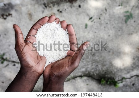 Hands holding rice - stock photo