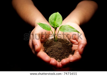Hands holding sapling in soil - stock photo