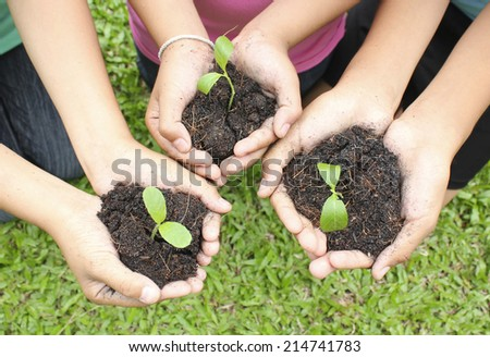 Hands holding sapling in soil surface - stock photo