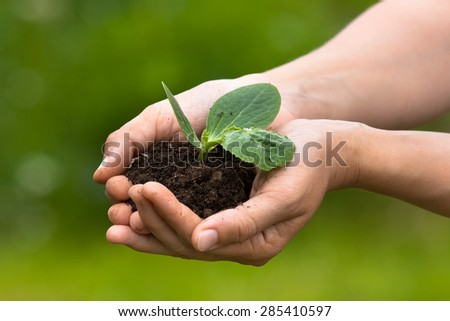 Hands holding seedling with soil on blurred background  - stock photo