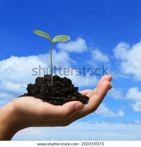Hands holding seedlings - stock photo