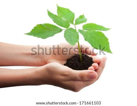 Hands holding small young tree isolated on white background - stock photo