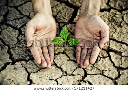 hands holding tree growing on cracked earth /hands growing tree / save the world / environmental problems / love nature / heal the world / cut tree - stock photo