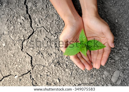 hands holding tree growing on cracked earth /hands growing tree / save the world / environmental problems / love nature / heal the world / cut tree / growing tree on crack ground / love tree  - stock photo