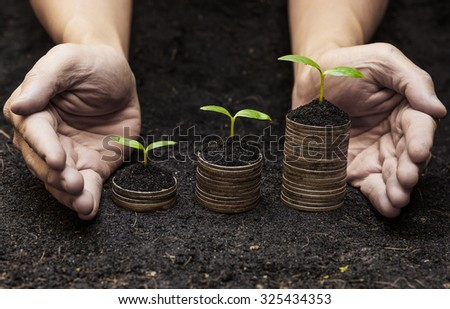 hands holding trees growing on coins / csr / sustainable development / economic growth / trees growing on stack of coins / Business with environmental concern - stock photo