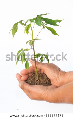 hands holding young plant. Take care concept. - stock photo