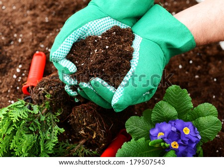 hands in gloves put plants into the soil - stock photo
