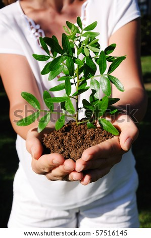 Hands of a young girl and a little tender sprout - stock photo