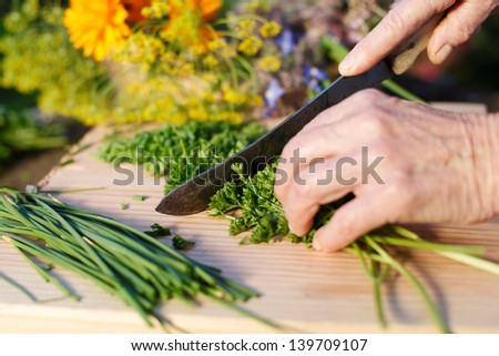 Hands of an elderly grandmother chopping fresh parsley from the garden for use in her cooking as she prepares the meal - stock photo