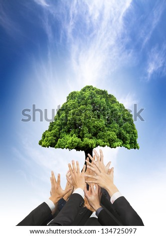 hands of business people holding green old tree. business with eco concept - stock photo
