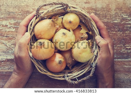 Hands of men holding a basket with ripe onions. View from above. Organic vegetables. Bio healthy food. Toned image - stock photo