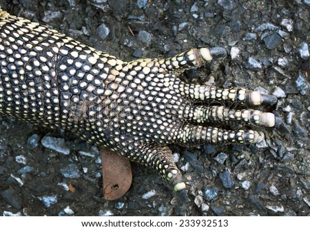 Hands of the Monitor lizard. - stock photo