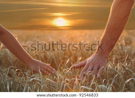 Hands on harvest - stock photo