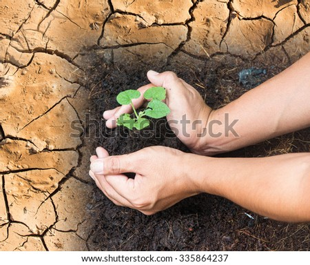 hands planting a tree.Complete soil into the land, but the drought. Ecology, World Environment, Tree of Knowledge concept. - stock photo