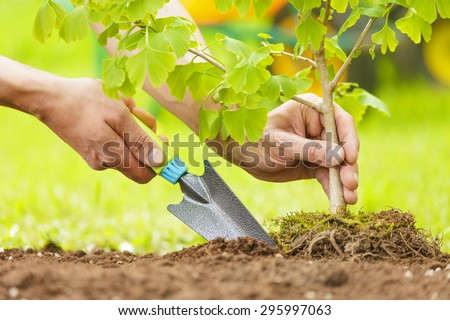 Hands Planting Small Tree with roots in a garden on green background - stock photo